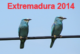 Photoalbum: Extremadura 2014, Birds and other